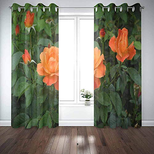 N / A Long Window Curtains, Door Window Curtain Tea Roses Blossom in The Garden Window Blackout Curtains for Family Friends Kids 2 Panels Windows Curtains