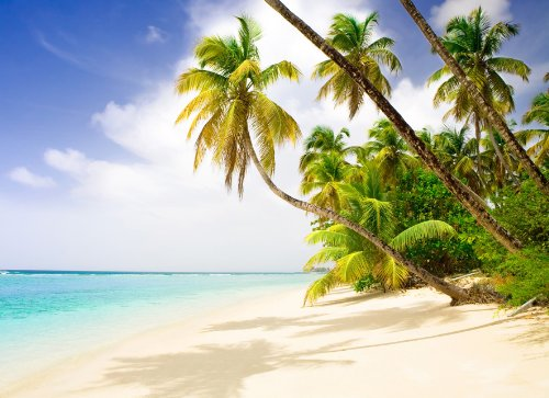 Fototapete SELBSTKLEBEND Papier-(02)-Kein einkleistern, mehrfach klebbar, wieder ablösbar-PALM BEACH-272x198cm-8 Teile-Palmen-Strand Karibik Südsee Skyline Natur Landschaft Stickers Meer Sonne