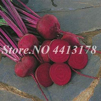 Shopmeeko GRAINES: 200 pcs Juicy Betteraves Outdoor Garden Bonsai Planta Boltardy Betterave plantes de légumes bio pour fruits en pot de fleurs Pot Planters: 6