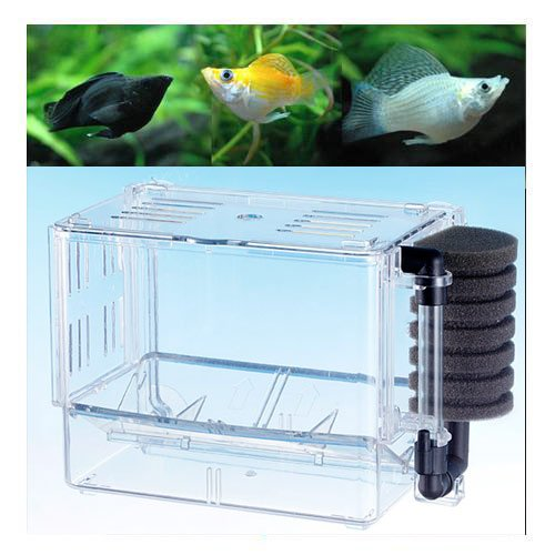 (熱帯魚)ミックスバルーンモーリー(4匹) + ベビーボックス・プラス セット 本州・四国限定