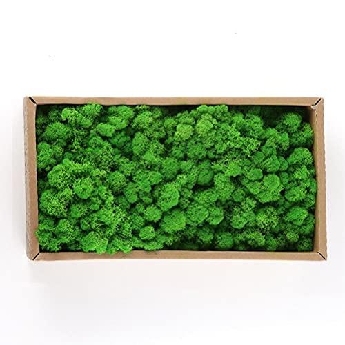Jxfrice Musgo decorativo, hierba artificial para jardín, musgo conservado natural duradero para decoración del hogar, modelos/decoración de acuario
