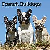 French Bulldogs - Französische Bulldoggen 2020 - 16-Monatskalender mit freier DogDays-App: Original BrownTrout-Kalender [Mehrsprachig] [Kalender] (Wall-Kalender)