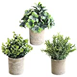 THE BLOOM TIMES Set of 3 Small...