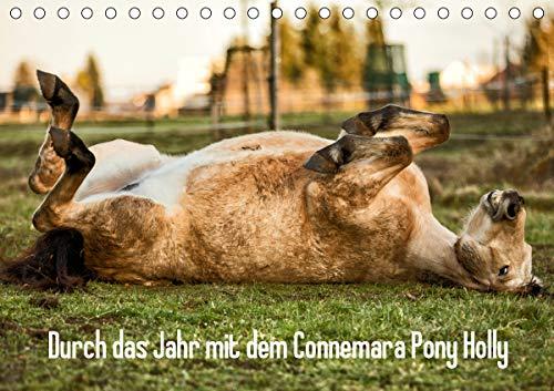 Durch das Jahr mit dem Connemara Pony Holly (Tischkalender 2021 DIN A5 quer)