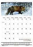 House of Doolittle 2017 Monthly Wall Calendar