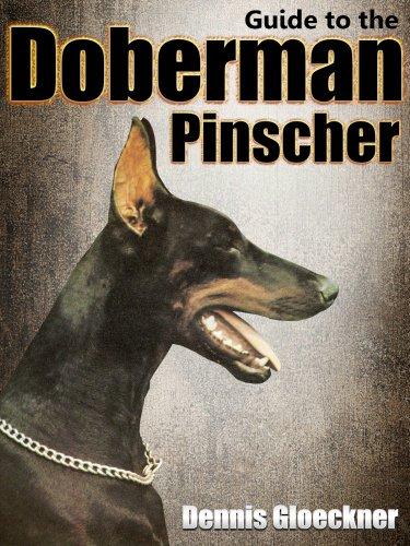 Guide to the Doberman Pinscher