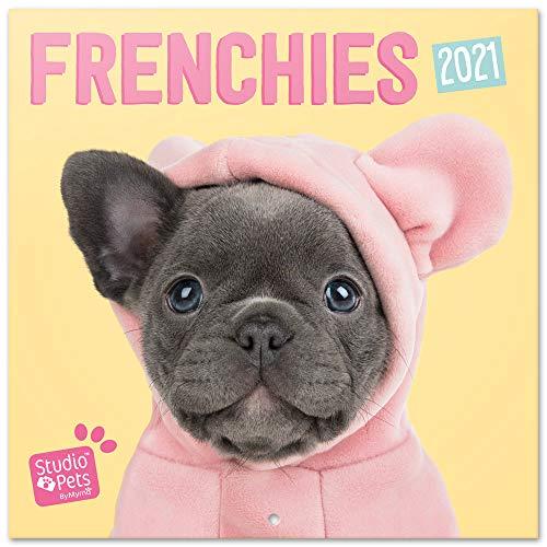 Grupo Erik Official Studio Pets French Bulldog 2021 Wall Calendar 11.8 x 11.8 inches (16 Months) Family Planner Calendar 2021