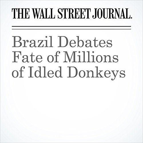 Brazil Debates Fate of Millions of Idled Donkeys copertina