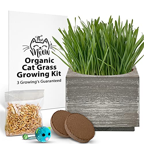 Organic Cat Grass Seeds Kit - Organic Seed & Soil for 3 Growing's - 4 x 4 Inch Rustic Planter - Healthy Pet Grass Supplement - Wheatgrass Growing Kit (Sea Foam)