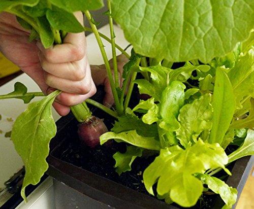 Bio-Gärtnern am Fensterbrett - 3