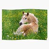 Generic Foal Animal Ponies Horse Cute Pony Haflinger I