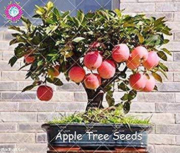 30pcs Dwarf Graines Arbre Miniature Sweet Seeds fruits bio légumes Graines de plantes d'intérieur ou extérieur pour jardin