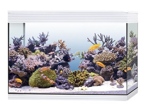 Askoll Aa350078 Acquario Pure Marine High Cube Marino Completo Accessoriato, XXL, Nero
