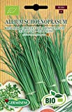 Germisem Orgánica Allium Schoenopasum Semillas de Cebollino 2 g, ECBIO1104