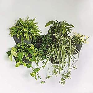 Jardín Vertical MH. Maceta Hexagonal de 350x 200x 285 mm con autorriego. Crea un Mosaico vegetal en espacios interiores y exteriores.