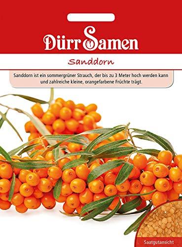 Dürr samen Sanddorn Sommergrüner Strauch bis 3 Meter hoch orangefarbene Früchte ca.20 Samen