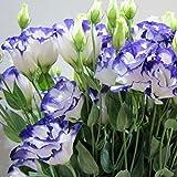 ADOLENB Seed House - 50/100 PCS Semillas de Eustoma/Lisianthus Bonsai semillas de plantas semillas de flores