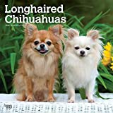Longhaired Chihuahuas - Langhaar-Chihuahuas 2020 - 16-Monatskalender mit freier DogDays-App: Original BrownTrout-Kalender [Mehrsprachig] [Kalender] (Wall-Kalender)