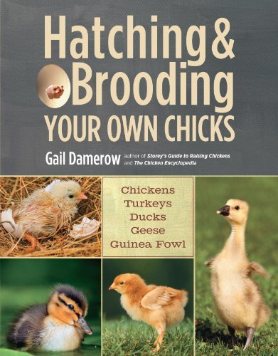 Hatching and Brooding Your Own Chicks by Gail