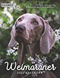 Weimaraner Calendar 2022: Gifts for Friends and Family with 18-month Monthly Calendar in 8.5x11 inch