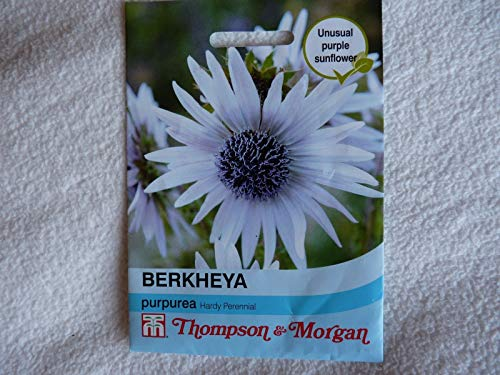 Portal Cool Thompson & Morgan Berkheya purpurea Hardy 10 Vivaces Plantes par Paquet graines