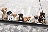 Hunde auf Stahlträger - New York Skydogs - Spaß Städte