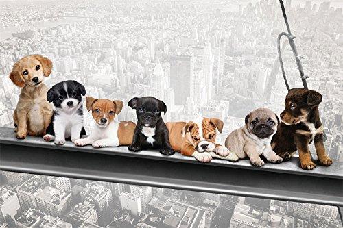 Hunde auf Stahlträger - New York Skydogs - Spaß Städte Welpen Poster Plakat Druck - Grösse 91,5x61 cm