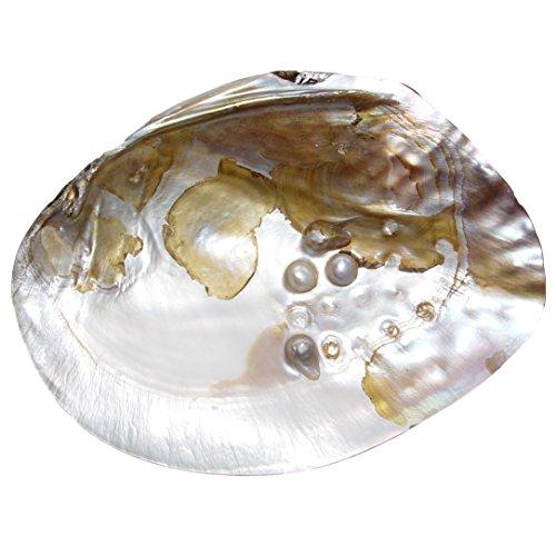 Perlmutt Muschel natur eingewachsener Perle Größe: ca. 15 x 10 cm ideal zur Deko oder Aufbewahrung von Kleinigkeiten.(3896)