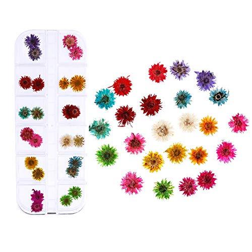 12 Stücke Nagel Getrocknete Blume, 1 Box 3D Nail Art Sticker Nägel Kunst Trocken Blumen mit Pinzette Echte Getrocknete Blumen Nagelkunst Aufkleber für Nagel Dekor Maniküre...