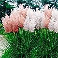 Outsidepride Pampas Grass Seeds - Mix