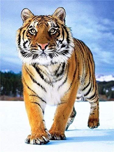 Diamante Pintura Animal Tigre Diamante Pintura Animal Tigre 5D DIY Diamante Bordado Punto de cruz Frescos para el hogar @ Light_Grey_55X75CM