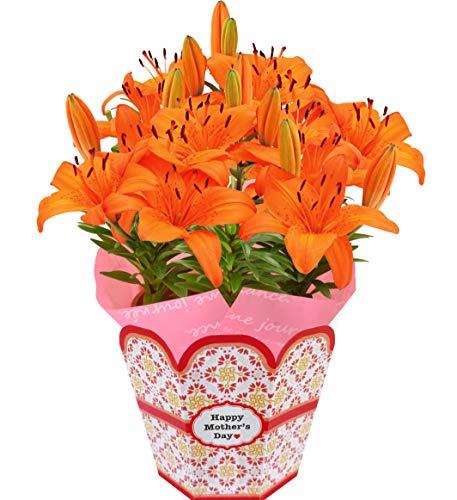 花のギフト社 母の日 百合 花鉢 鉢花 オレンジ 鉢植え プレゼント 花 フラワーギフト 5.5号鉢
