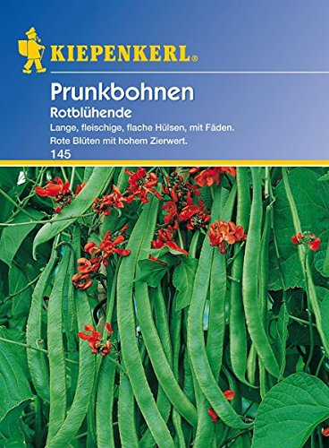 Bohne Rotblühende / Feuerbohnen