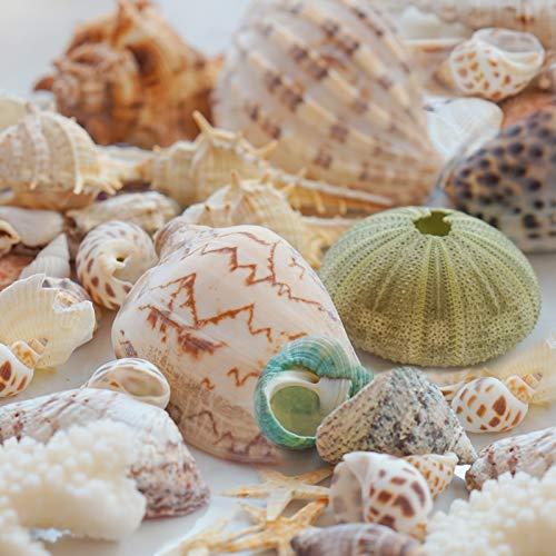 Kingrol 1 Lb. Colorful Beach Sea Shells, Mixed Natural Seashells Starfish Conch for Fish Tank Vase Filler, Party Wedding Home Decor, Crafts Supplies