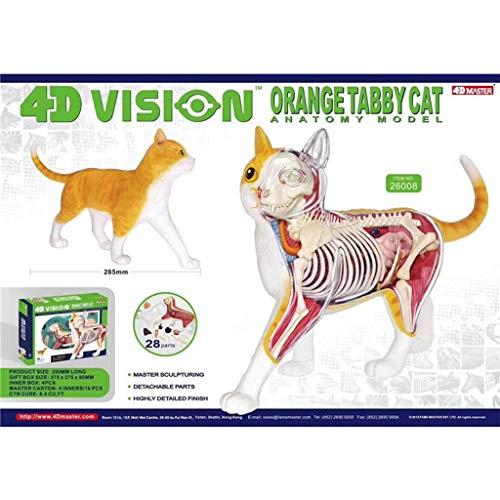 FEIGER Modelos Cat 4D Master Puzzle Ensamblaje Juguete Biología Animal Órgano Anatómico Enseñanza médica