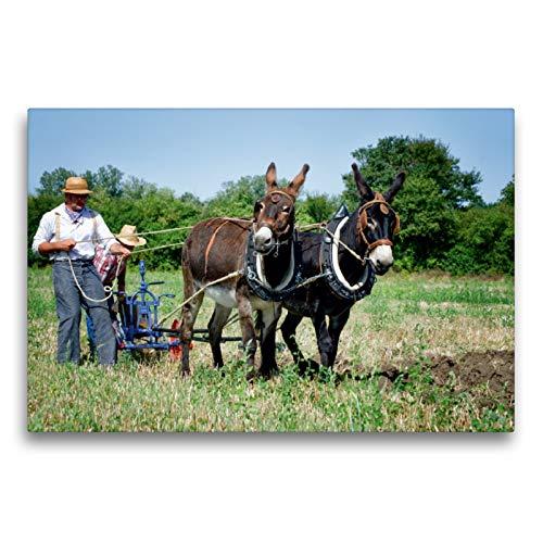 Premium Textil-Leinwand 75 x 50 cm Quer-Format Feldarbeit mit zwei Eseln | Wandbild, HD-Bild auf Keilrahmen, Fertigbild auf hochwertigem Vlies, Leinwanddruck von Alain Gaymard