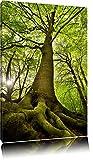 Riesiger Baum im Dschungel Format: 120x80 auf Leinwand, XXL