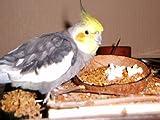 Sitzbrett mit Kokosschale Futternapf zum Herausnehmen - 7
