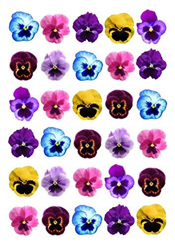 lidl viooltjes