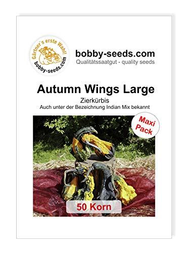 Autumn Wing L Zierkürbis von Bobby-Seeds 50 Korn