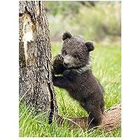 油絵 数字キットによる絵画 塗り絵 クマの動物 大人 手塗り DIY絵 デジタル油絵 40x50センチ diyの木製フレーム