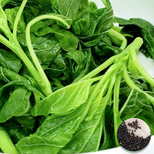 Welldales 50 Super Green Amaranth Seeds UK Large Yield Leafy Vegetables & Greens for Dishes