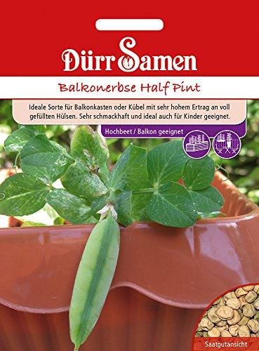 Balkonerbse Half Pint   Erbsensamen von Dürr-Samen