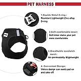 Harnais pour chien Petcomer en maille douce avec gilet matelassé confort, pour petit animal, chat et chiot