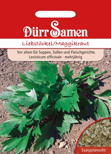 Dürr-Samen Liebstöckel/Maggikraut