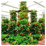 100 unids/pack de fresas fresa escalar grandes semillas de plantas rojas en casa jardín