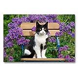 CALVENDO Premium Textil-Leinwand 90 x 60 cm Quer-Format Katze sitzt auf einem Gartenstuhl vor blauen Blüten, Leinwanddruck von Katho Menden