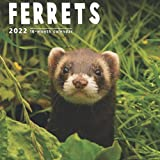 Ferrets Calendar 2022: 16 Month Calendar With Many Colorful Photos - Runs from September 2021 Through December 2022 . Size 8.5 x 8.5 Inches.