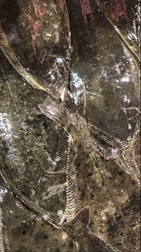 北海道 天然 ヒラメ1尾 3-4kg前後サイズ 活締 血抜き済み