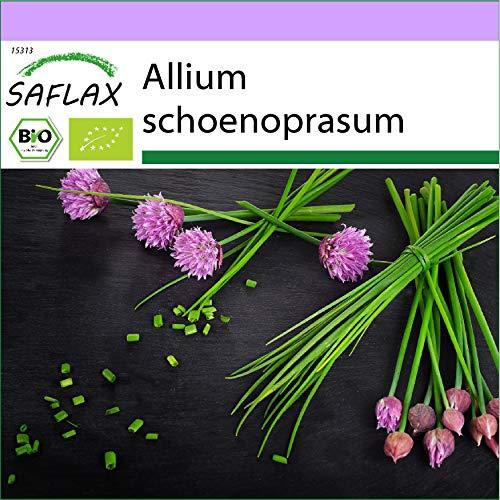 SAFLAX - BIO - Erba cipollina - 250 semi - Allium schoenoprasum